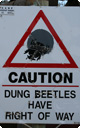 dung_beetle_caution