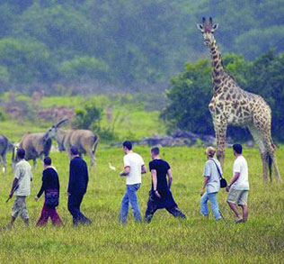 walking_safari
