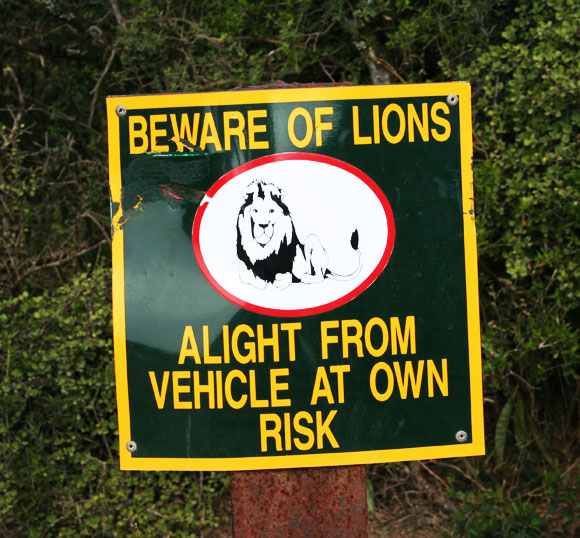 addo-elephant-park-beware-of-lions-sign