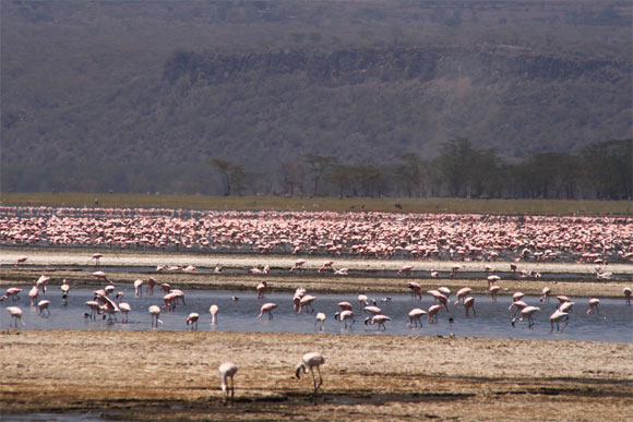 lake-nakuru-kenya-flamingos-2