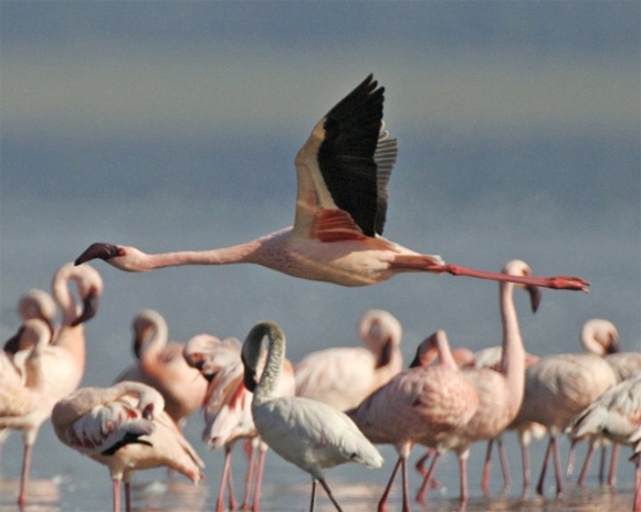 lake-nakuru-kenya-flamingos